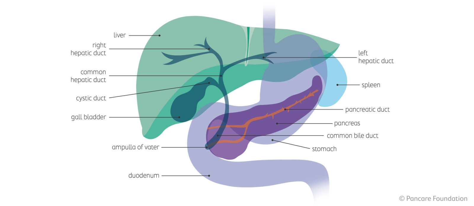 What is bile duct or gall bladder cancer?